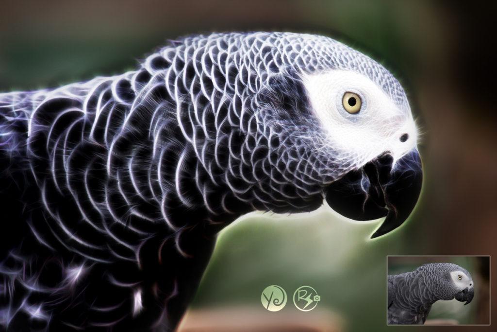 grey-parrot-1140551_1920-2