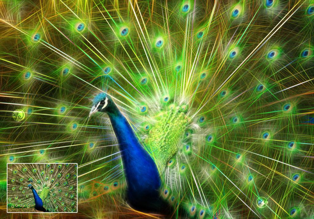peacock-1147322_1920_2
