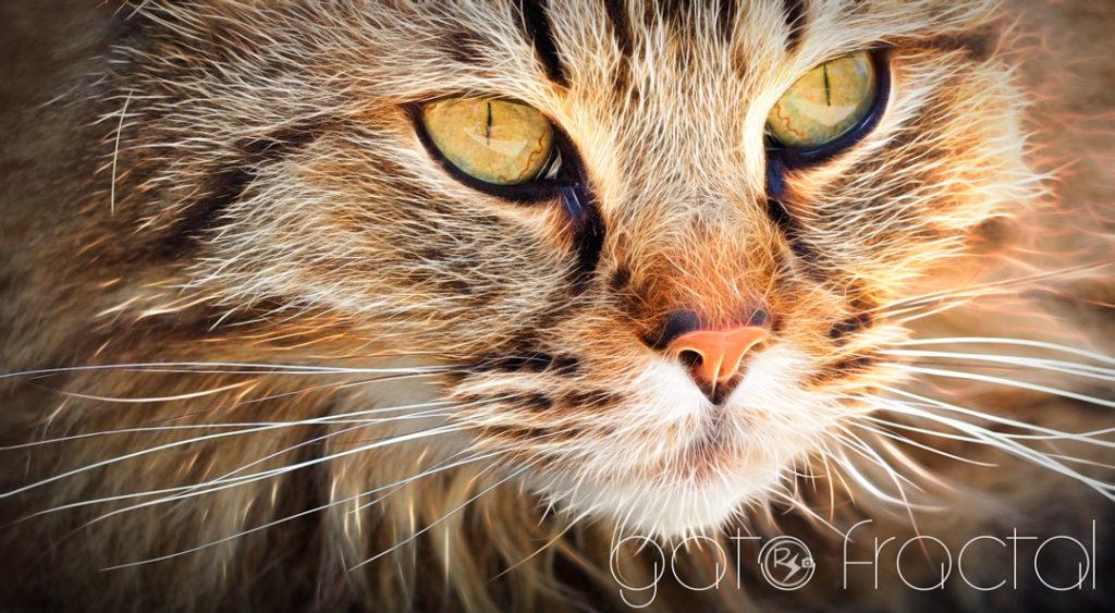 gato_fractal